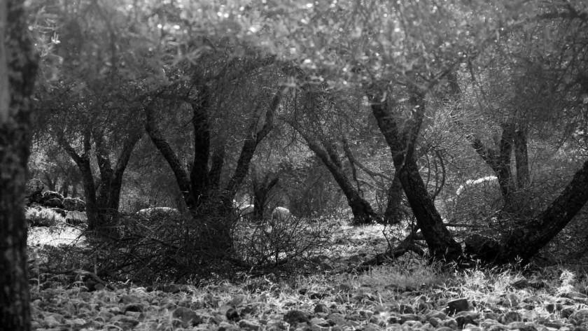 Von Bäumen und Geräuschen