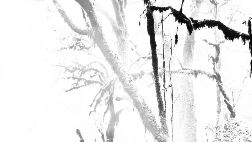 Weiße Hirsche, von Gerold Ducke